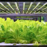 Four things every grower should know about full spectrum LED grow lights